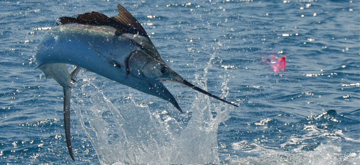 off the map charters marlin